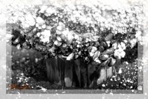 2010-04-19 Squalicum Beach Piling