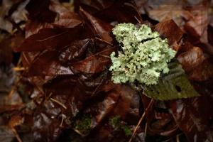 Ravenna, lichen, 2010-12-23