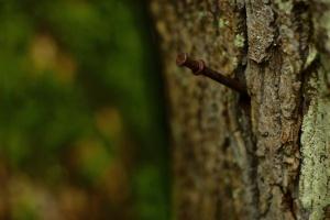 Ravenna, tree nail, 2010-12-23