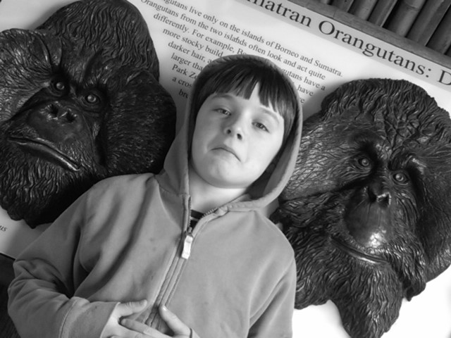 Liam and the Orangutans