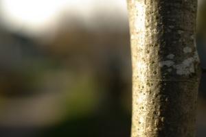 2012-04-08-bark-bg-1920x1285