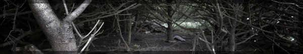 2013-08-16 Dark Grove [wide wallpaper]
