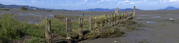 2013-09-01 Padilla Bay Pilings
