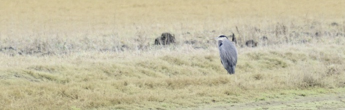 2014-01-01-Skagit-Perserve-Heron-2400x760