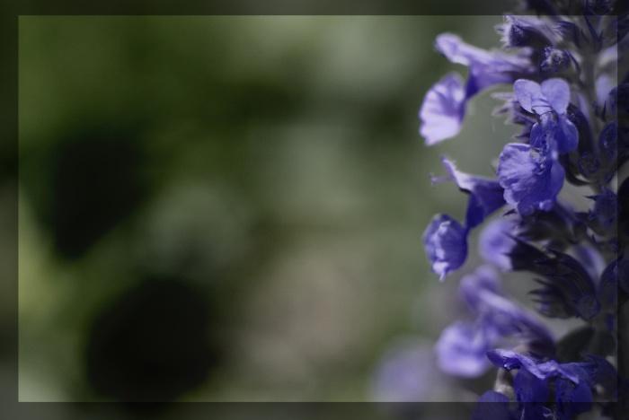 macro, blossoms