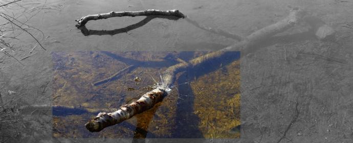 Photo of Squire Lake Frozen Shore