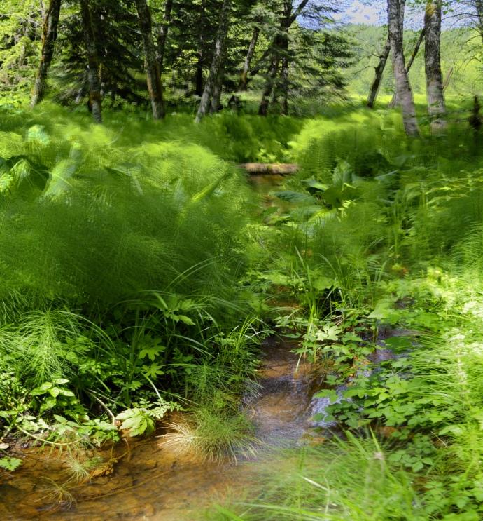 p4-meadow-1688x1811