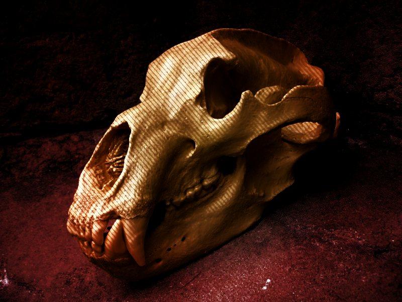 0-Bear_skull