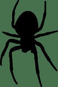 spider-darkmoon