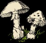 two-mushrooms