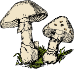 two-mushrooms