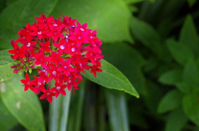 flower__img0626.e