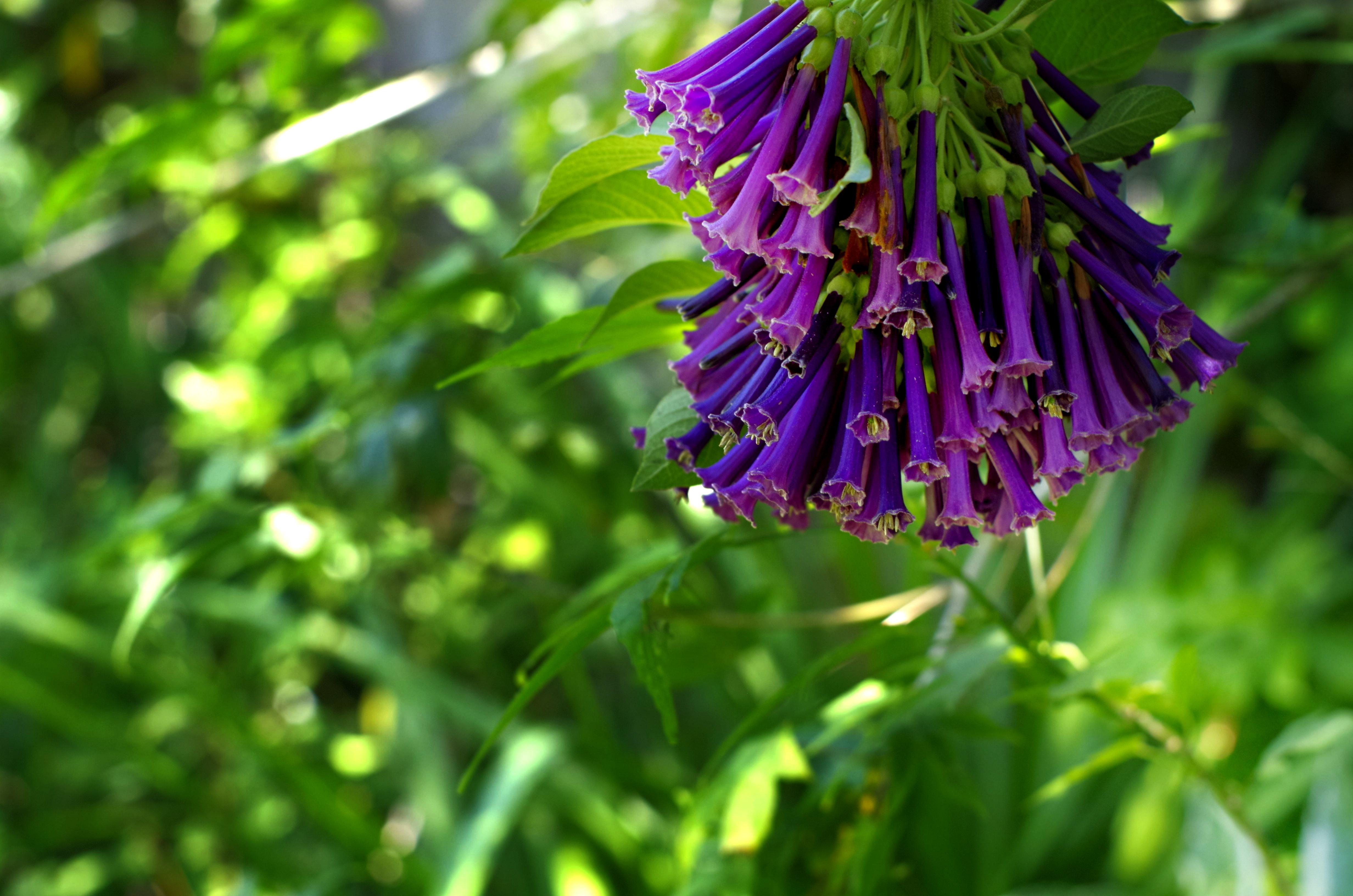 flower__img0627.e