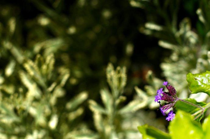 flower__img0635.e