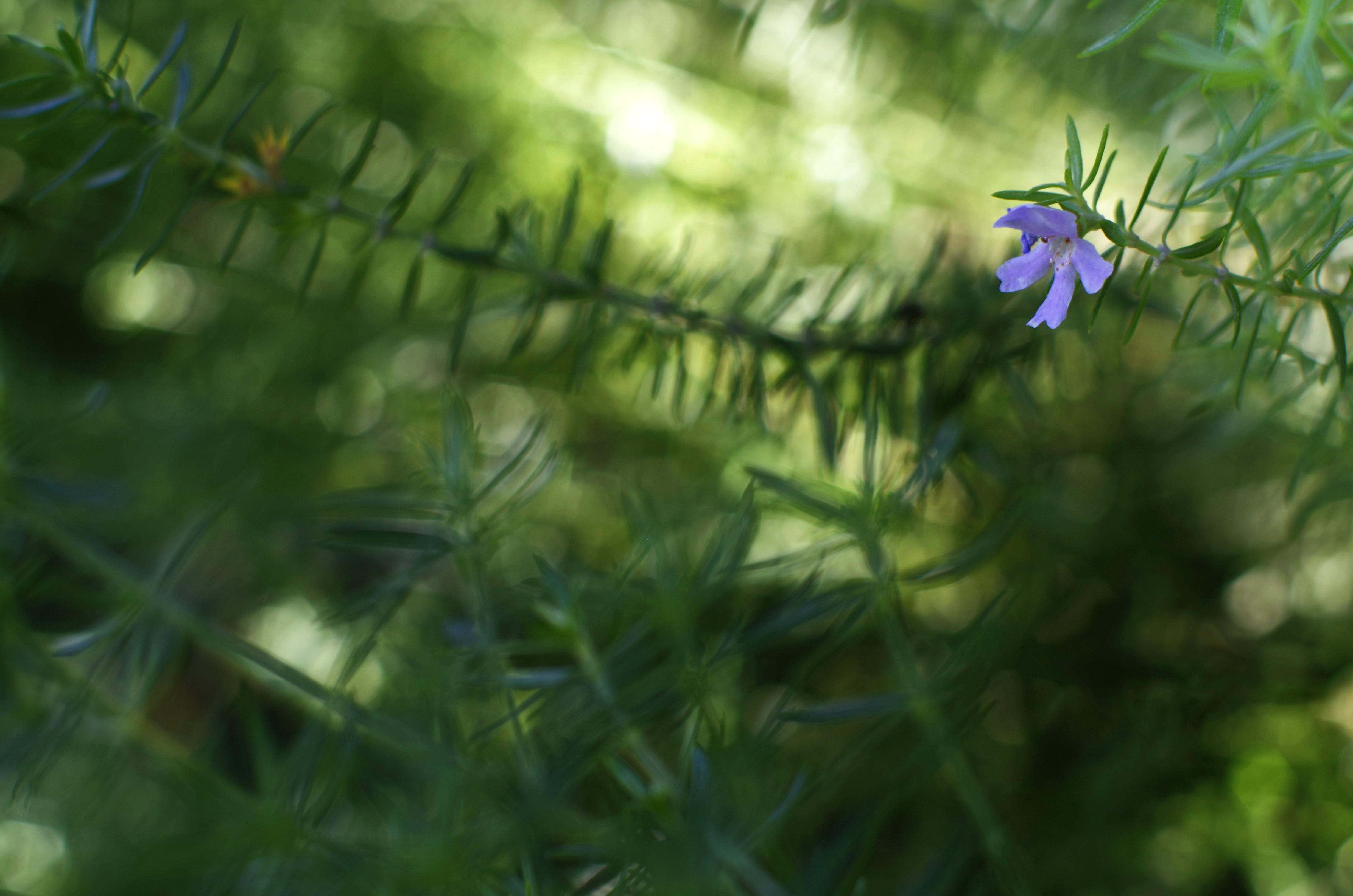 flower__img0638.e