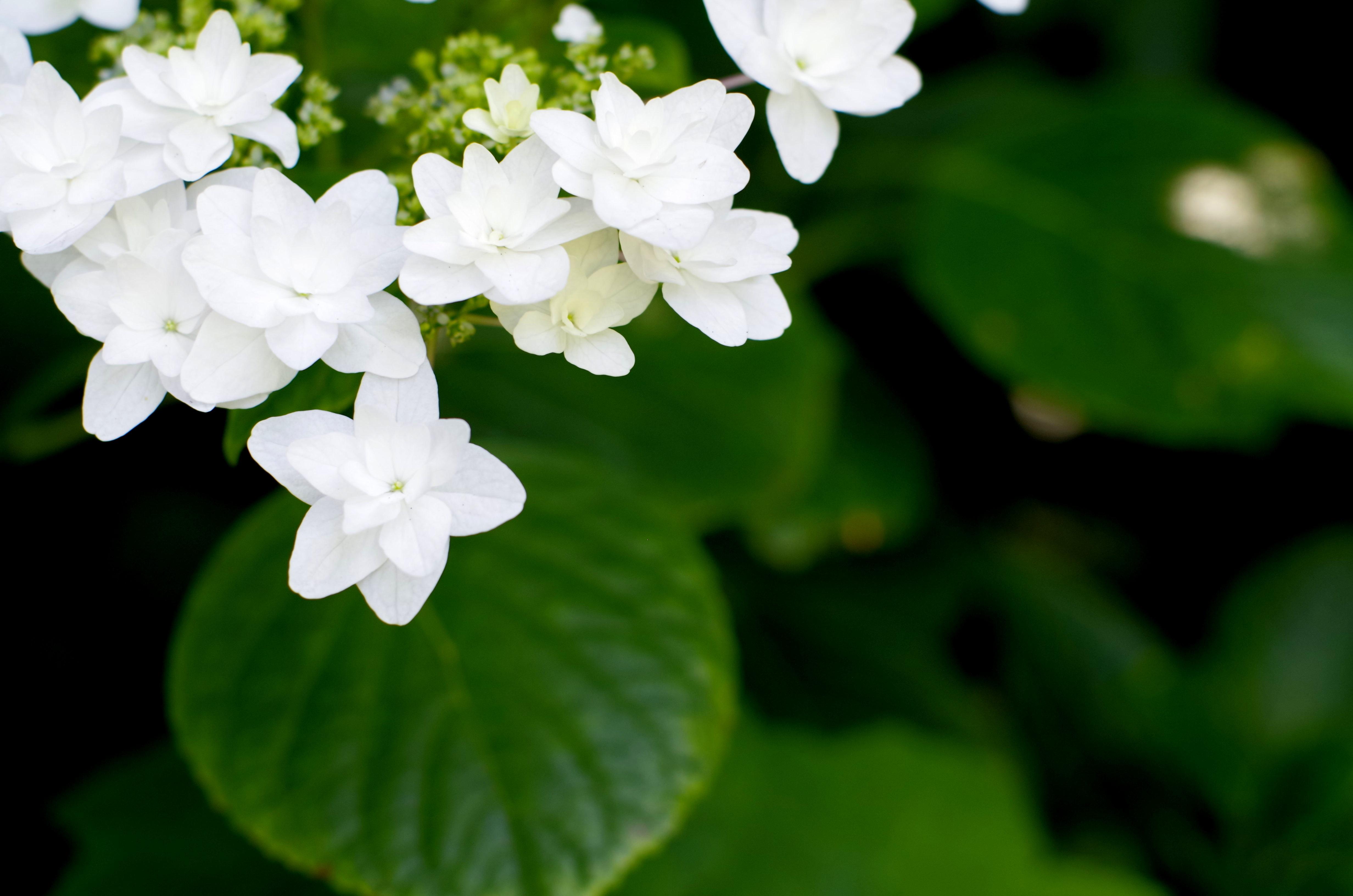 flower__img0639.e