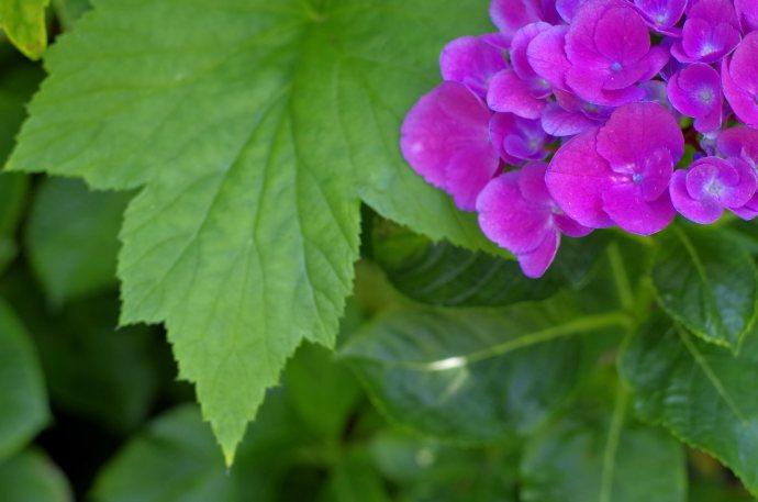 flower__img0640.e