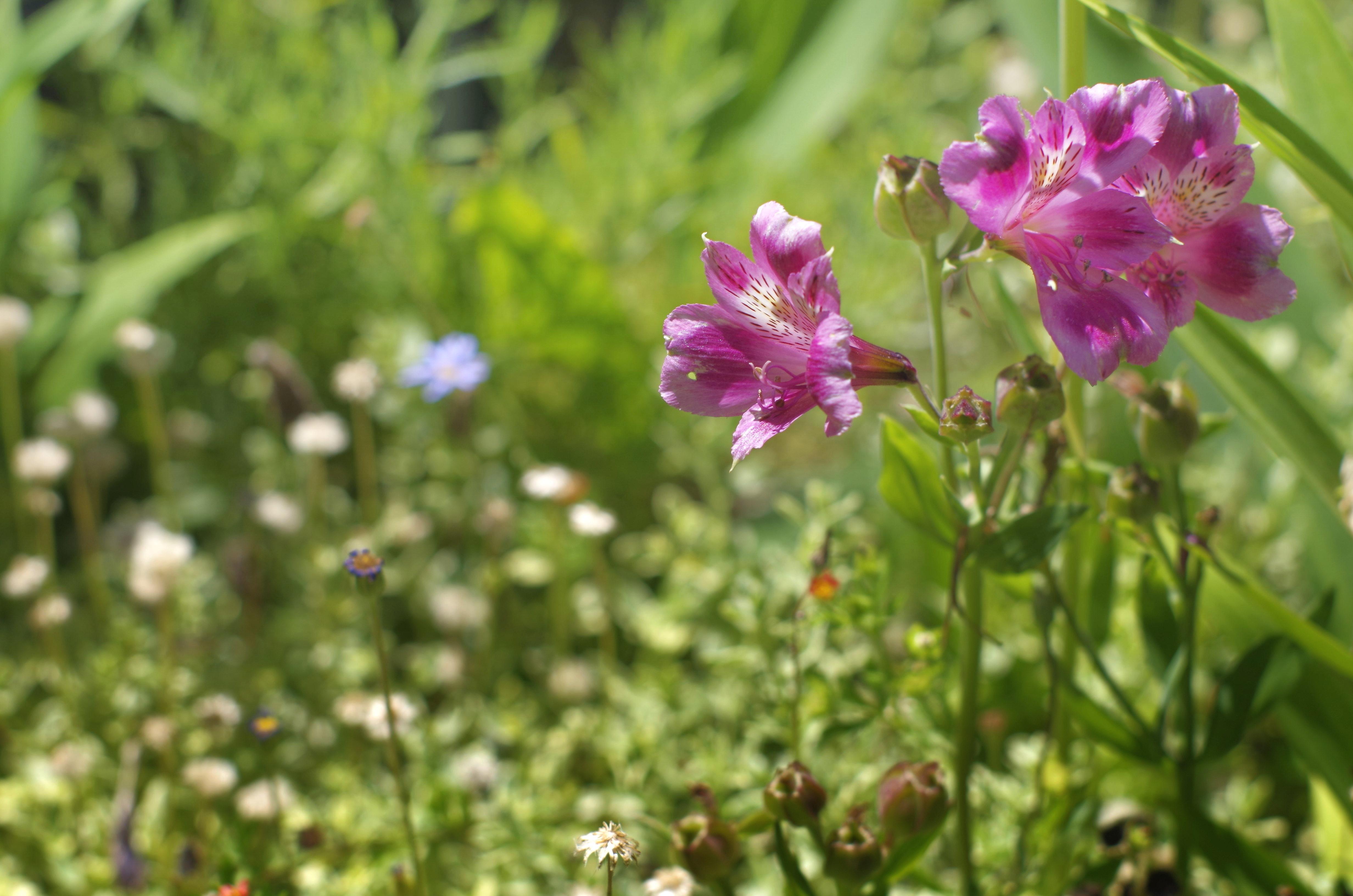 flower__img0642.e