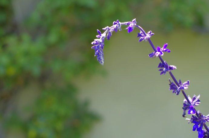 flower__img0646.e