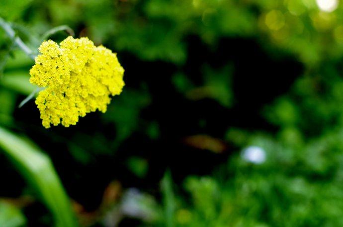 flower__img0648.e