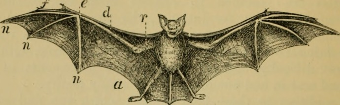 Animal_locomotion_or_walking,_swimming,_and_flying_-_with_a_dissertation_on_aëronautics_(1873)_(14744335846).jpg